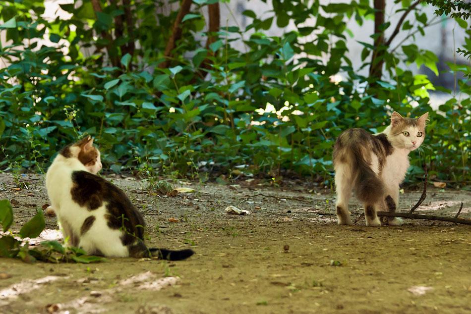 Животный мир Тирасполя: кошки и собаки (19)