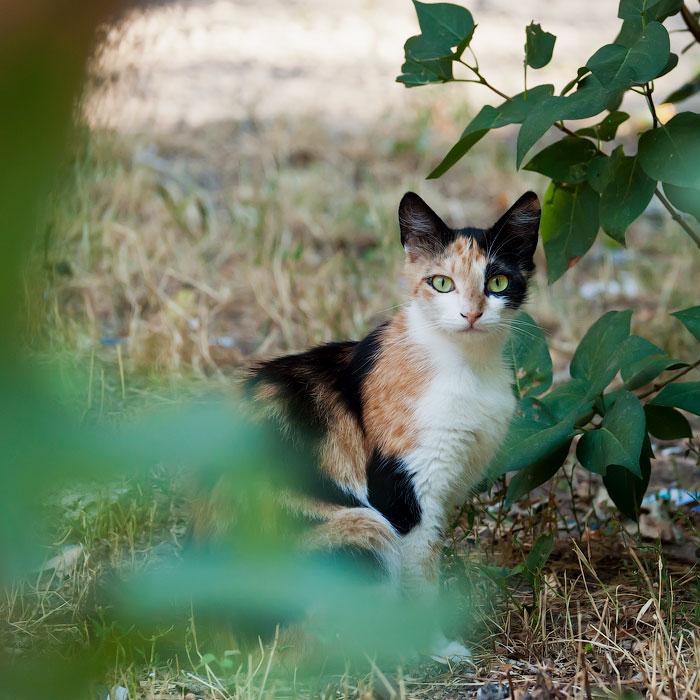 Животный мир Тирасполя: кошки и собаки (20)