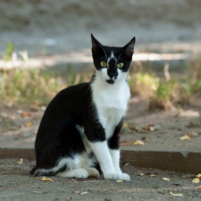 Животный мир Тирасполя: кошки и собаки (22)