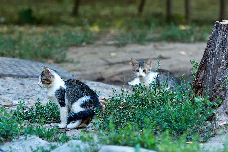 Животный мир Тирасполя: кошки и собаки (23)