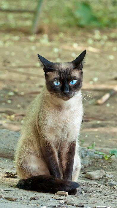 Животный мир Тирасполя: кошки и собаки (24)