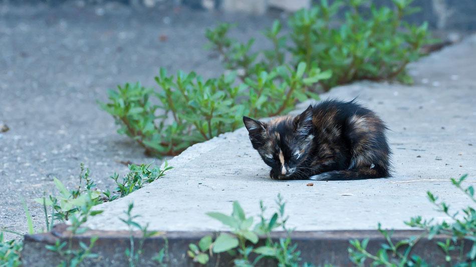Животный мир Тирасполя: кошки и собаки (25)