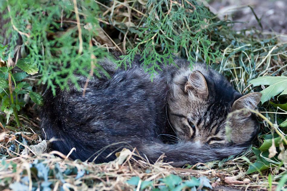 Животный мир Тирасполя: кошки и собаки (27)