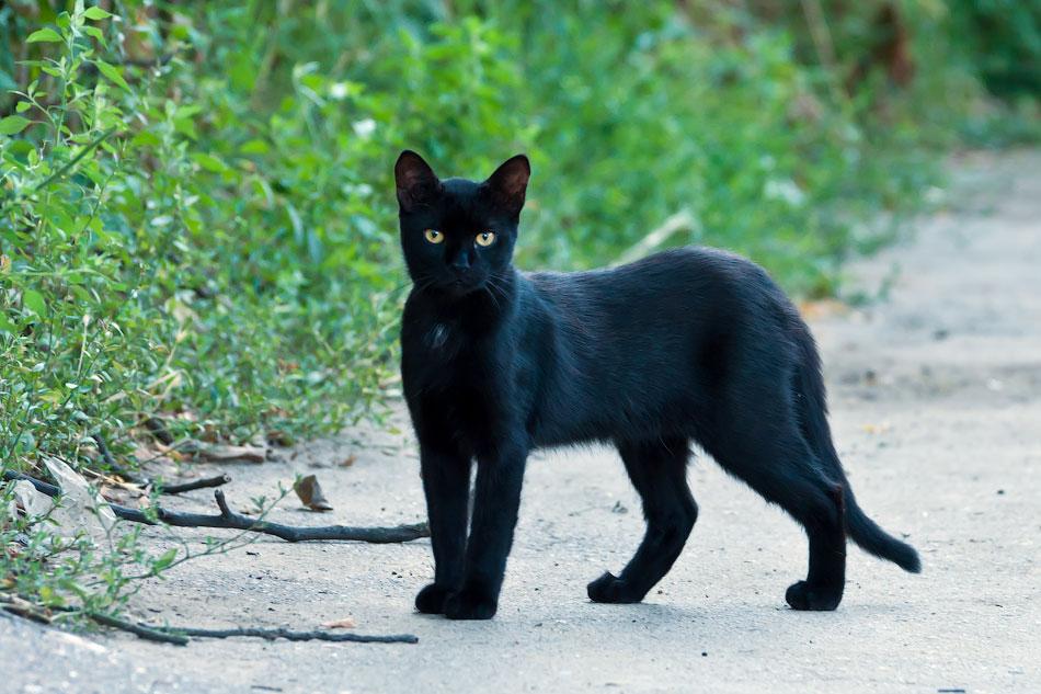 Животный мир Тирасполя: кошки и собаки (28)
