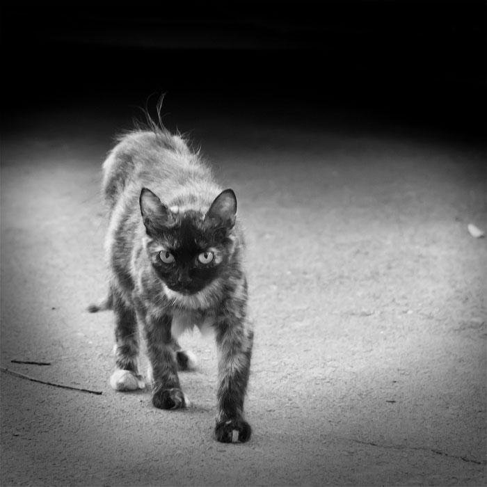 Животный мир Тирасполя: кошки и собаки (29)