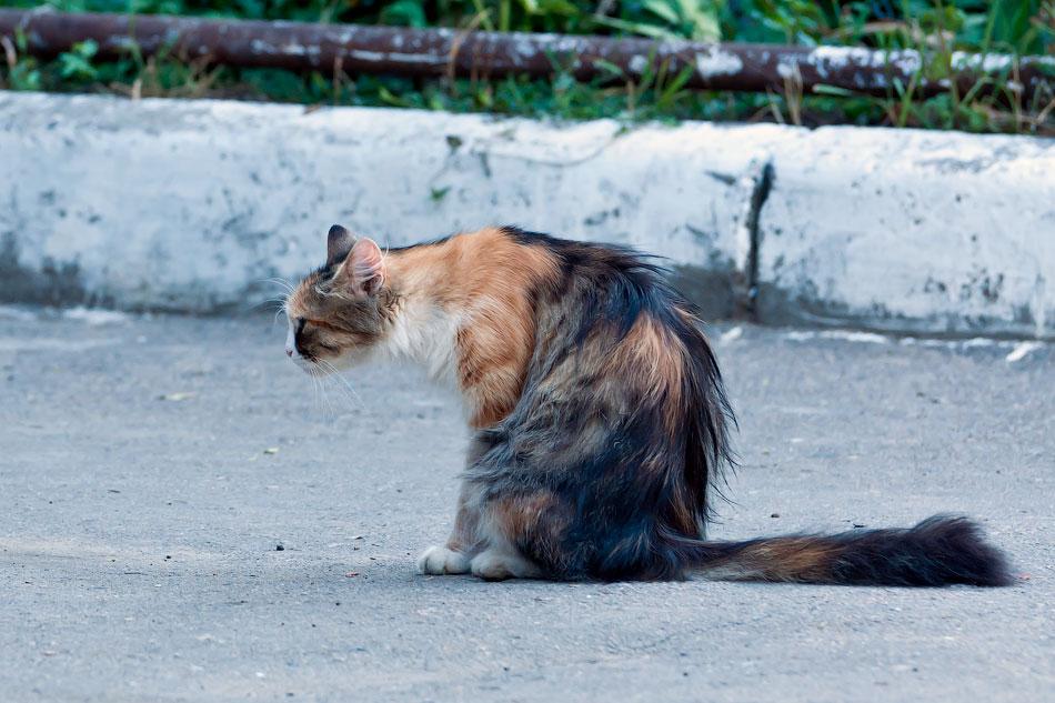Животный мир Тирасполя: кошки и собаки (30)