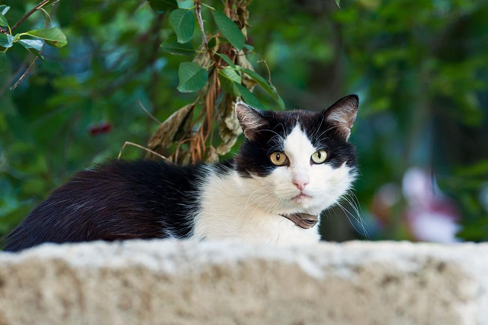 Животный мир Тирасполя: кошки и собаки (31)