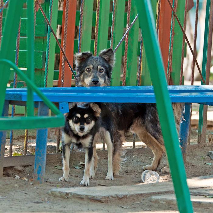 Животный мир Тирасполя: кошки и собаки (32)