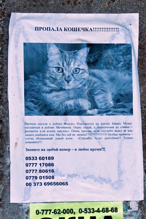 Животный мир Тирасполя: кошки и собаки (34)