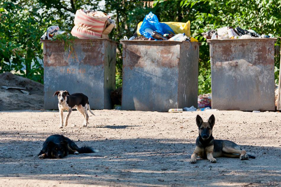 Животный мир Тирасполя: кошки и собаки (35)