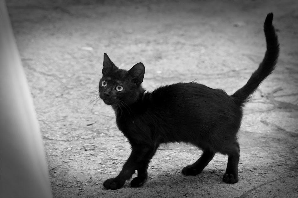 Животный мир Тирасполя: кошки и собаки (39)