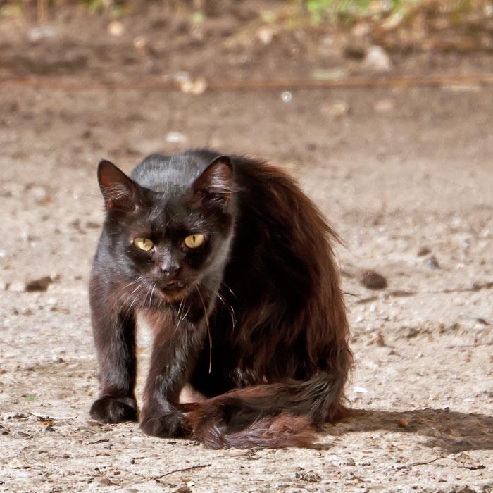 Животный мир Тирасполя: кошки и собаки (40)