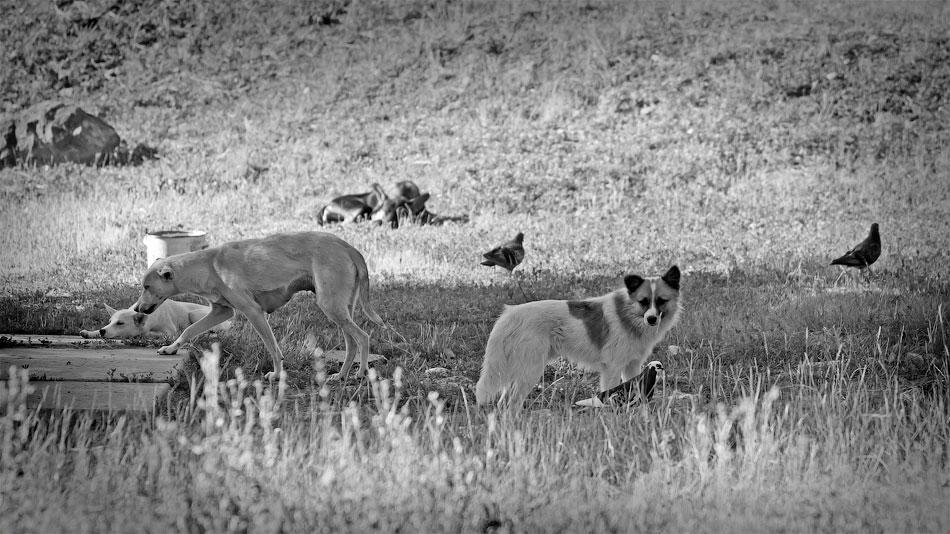 Животный мир Тирасполя: кошки и собаки (42)