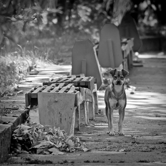 Животный мир Тирасполя: кошки и собаки (43)