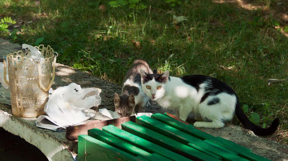 Животный мир Тирасполя: кошки и собаки (44)