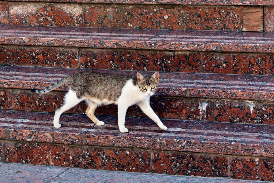 Животный мир Тирасполя: кошки и собаки (46)