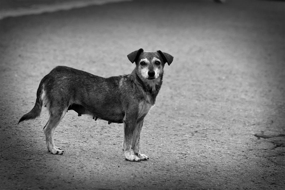 Животный мир Тирасполя: кошки и собаки (47)