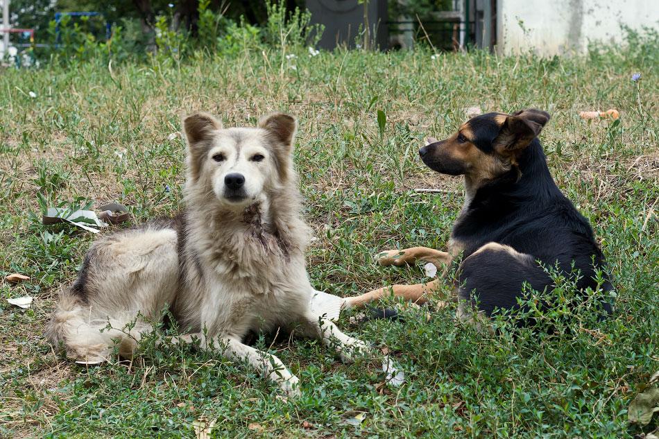 кошки и собаки Тирасполя