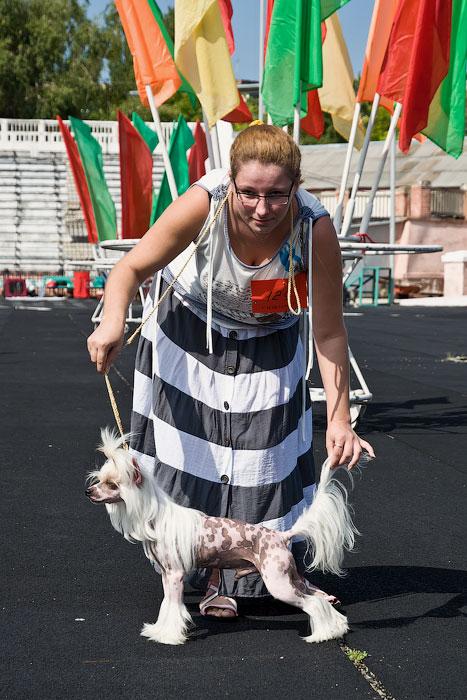 Выставка собак в Тирасполе - 11-12 августа 2012 года (1)