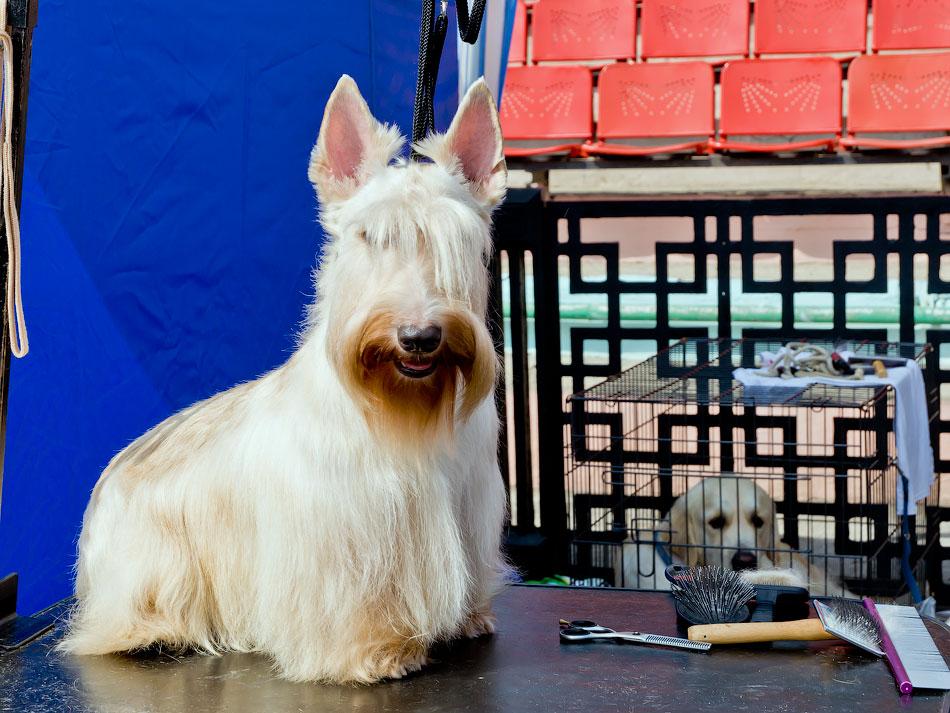 Выставка собак в Тирасполе - 11-12 августа 2012 года (3)