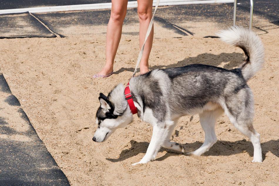 Выставка собак в Тирасполе - 11-12 августа 2012 года (4)