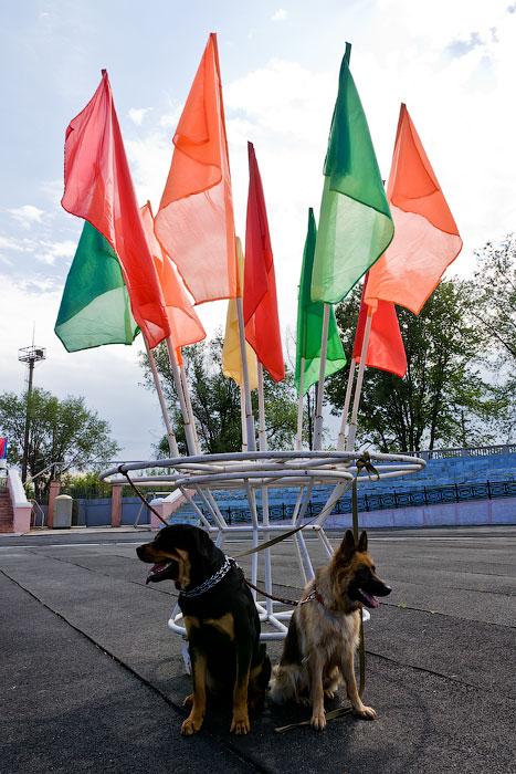 Выставка собак в Тирасполе - 11-12 августа 2012 года (5)
