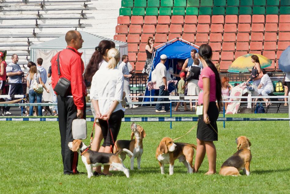 Выставка собак в Тирасполе - 11-12 августа 2012 года (6)