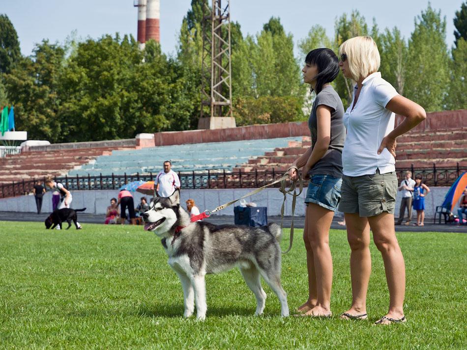 Выставка собак в Тирасполе - 11-12 августа 2012 года (10)