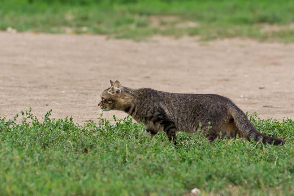 кошки и собаки Тирасполя (1)