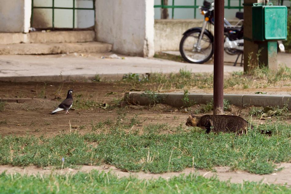 кошки и собаки Тирасполя (2)