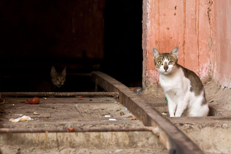 кошки и собаки Тирасполя (3)