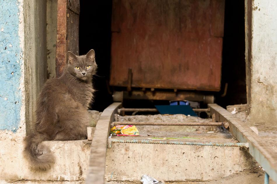 кошки и собаки Тирасполя (4)