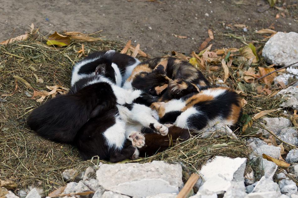 кошки и собаки Тирасполя (5)