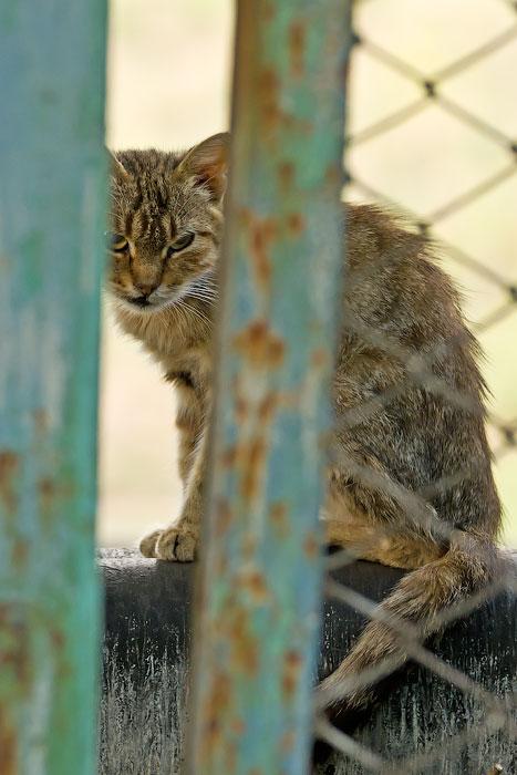 кошки и собаки Тирасполя (6)