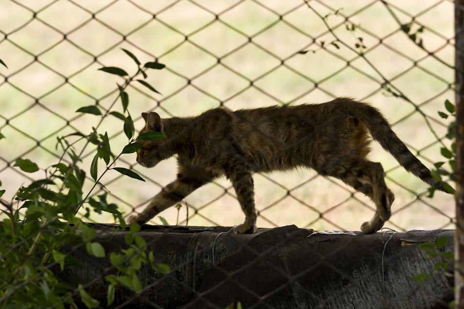 кошки и собаки Тирасполя (7)