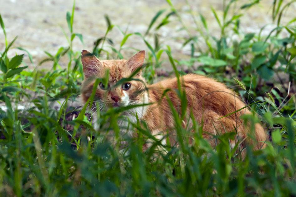 кошки и собаки Тирасполя (8)