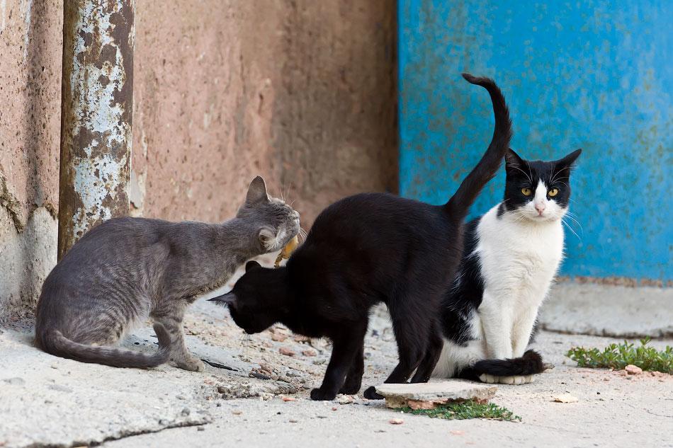 кошки и собаки Тирасполя (9)
