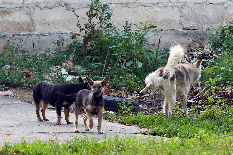 кошки и собаки Тирасполя (10)