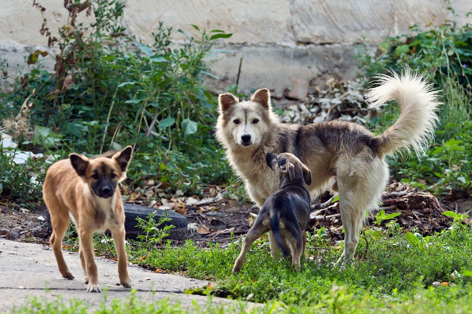 кошки и собаки Тирасполя (11)