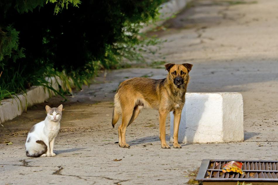 кошки и собаки Тирасполя (12)