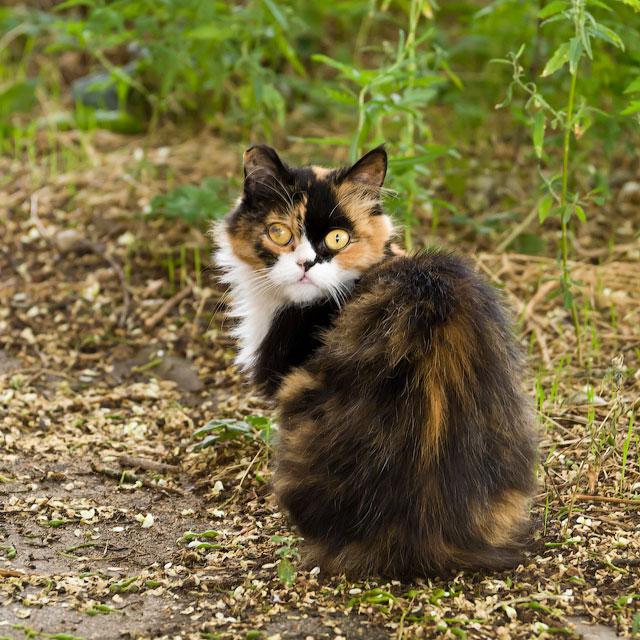 кошки и собаки Тирасполя (13)