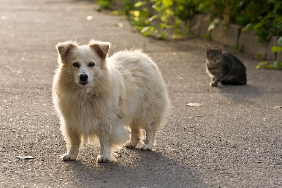 кошки и собаки Тирасполя (14)