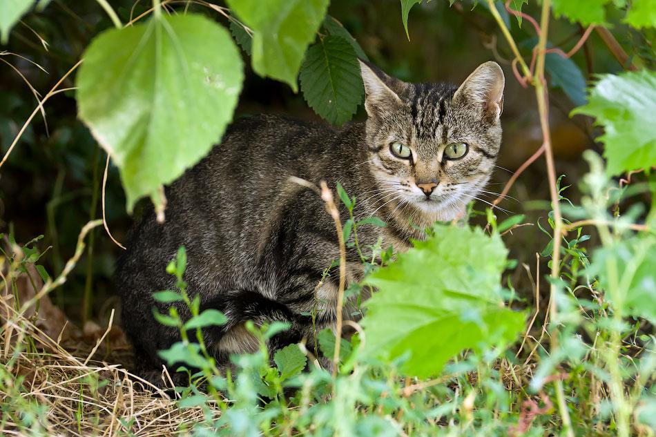 кошки и собаки Тирасполя (15)