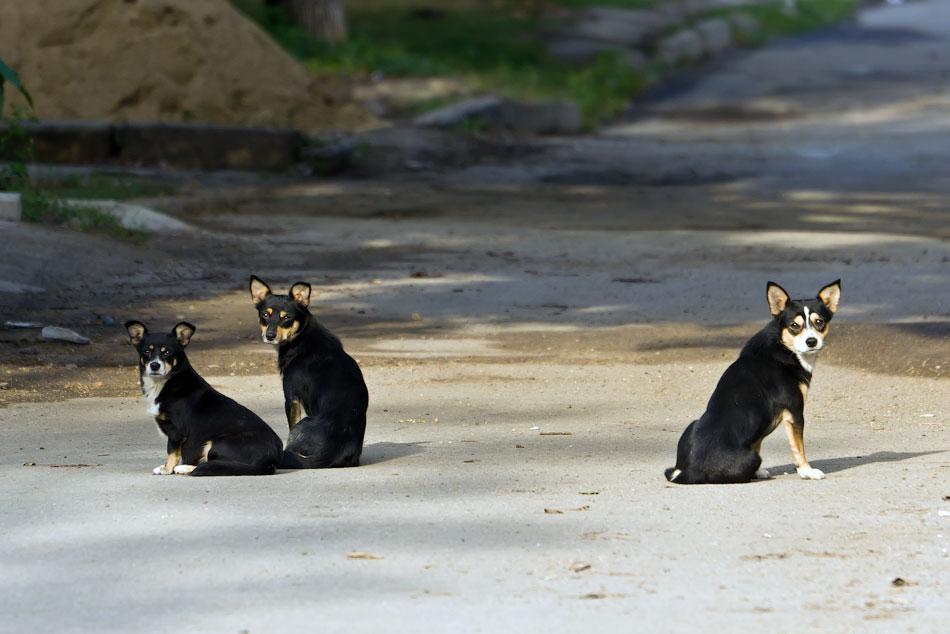 кошки и собаки Тирасполя (16)
