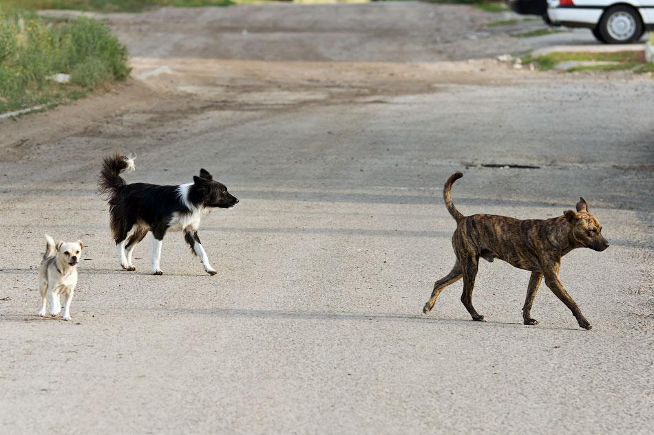 кошки и собаки Тирасполя (17)