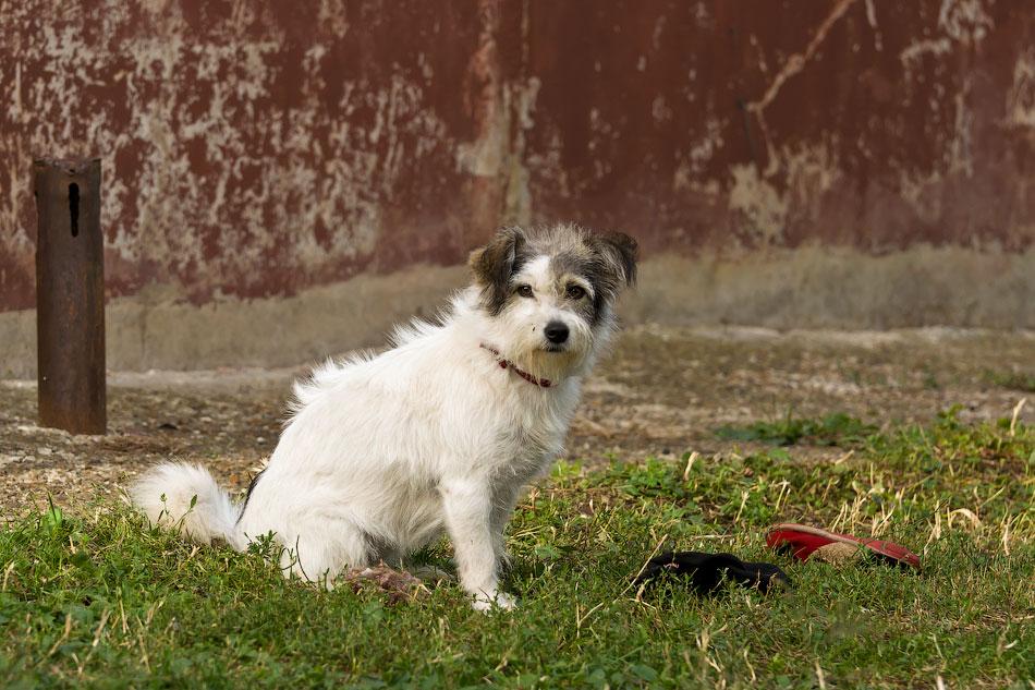 кошки и собаки Тирасполя (19)