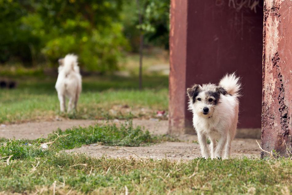 кошки и собаки Тирасполя (20)