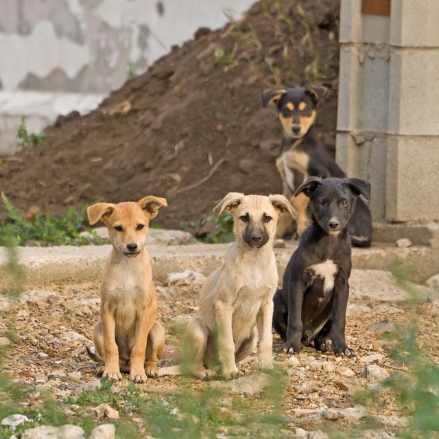 кошки и собаки Тирасполя (21)