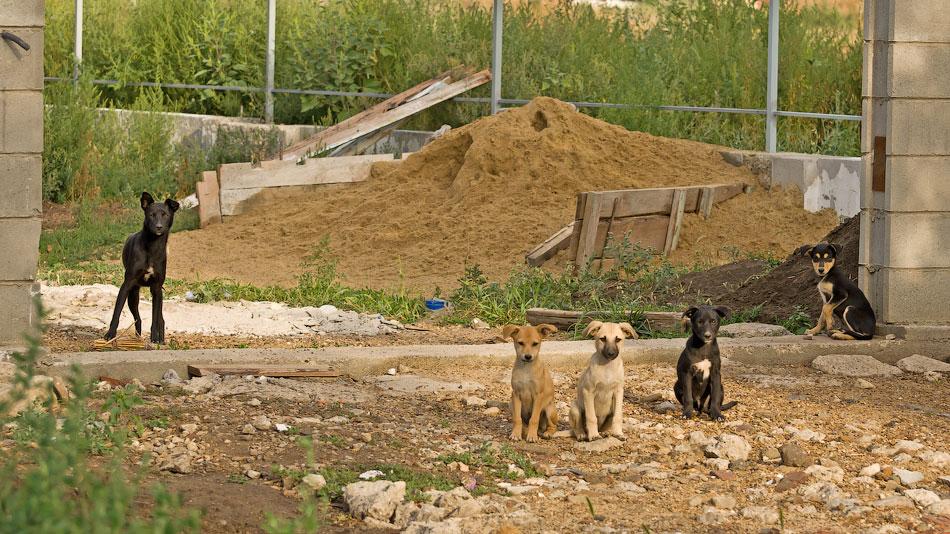 кошки и собаки Тирасполя (22)