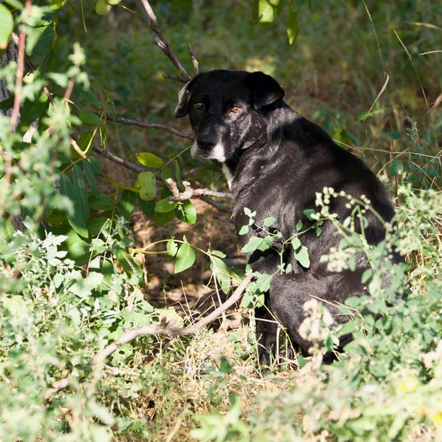 кошки и собаки Тирасполя (24)